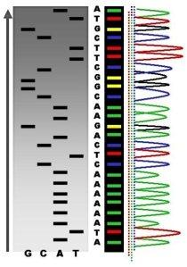 Dalla chimica alla biologia molecolare per esplorare il genoma